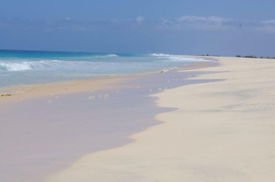 Cangrejos en playa en Boa Vista