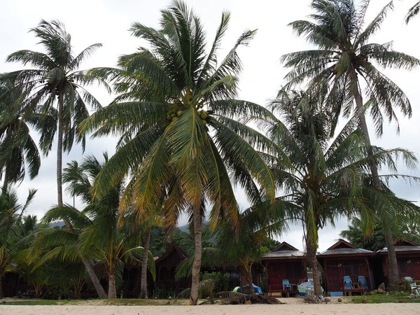 Guía completa de Pulau Tioman - Islas de Malasia • Murciélagos Juara Beach palmereas
