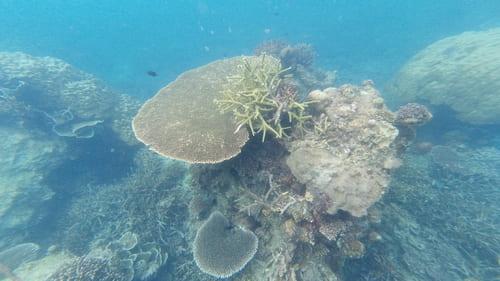 Guía completa de Pulau Tioman - Islas de Malasia • Shark point corales Pulau Tioman