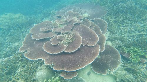 Guía completa de Pulau Tioman - Islas de Malasia • Shark point corales