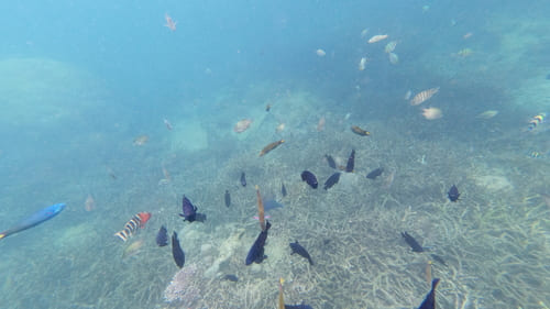 Guía completa de Pulau Tioman - Islas de Malasia • Shark point peces