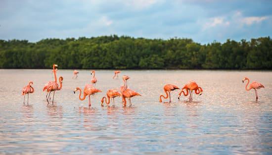 Viaje en grupo a México 12 días Diciembre • rio lagartos flamencos